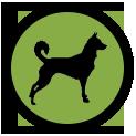 icone-transparent-solo-educateur-canin-chien-chiot-saint-andre-evreux-eure-27-correcteure