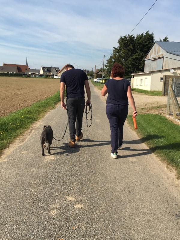 educateur-canin-jade-gimenez-saint-andre-evreux-eure-27-correcteure-canin-chien-staff-travail-marche
