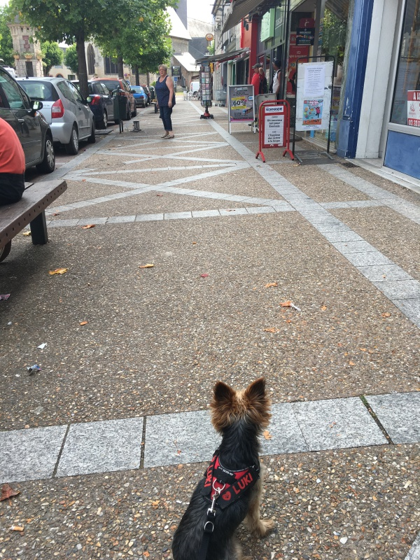 educateur-canin-jade-gimenez-saint-andre-evreux-eure-27-correcteure-canin-chien-yorkshire-pasbouger-travail