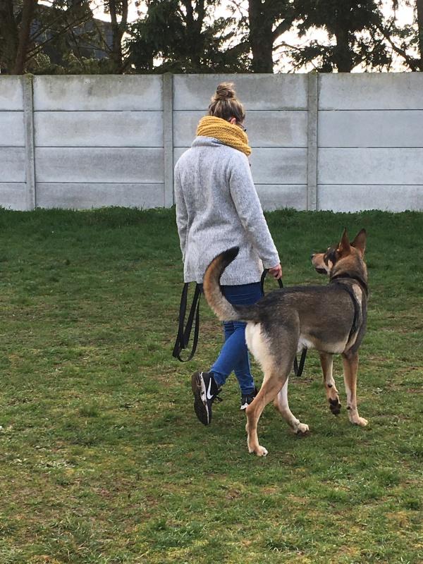 educateur-canin-jade-gimenez-saint-andre-evreux-eure-27-correcteure-canin-chien-berger-marcheaupied